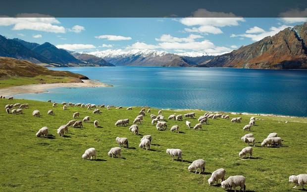 Регистрация компании в Новой Зеландии